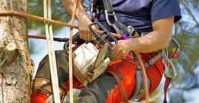 Harnais de sécurité et tronçonneuse pour le grimpeur